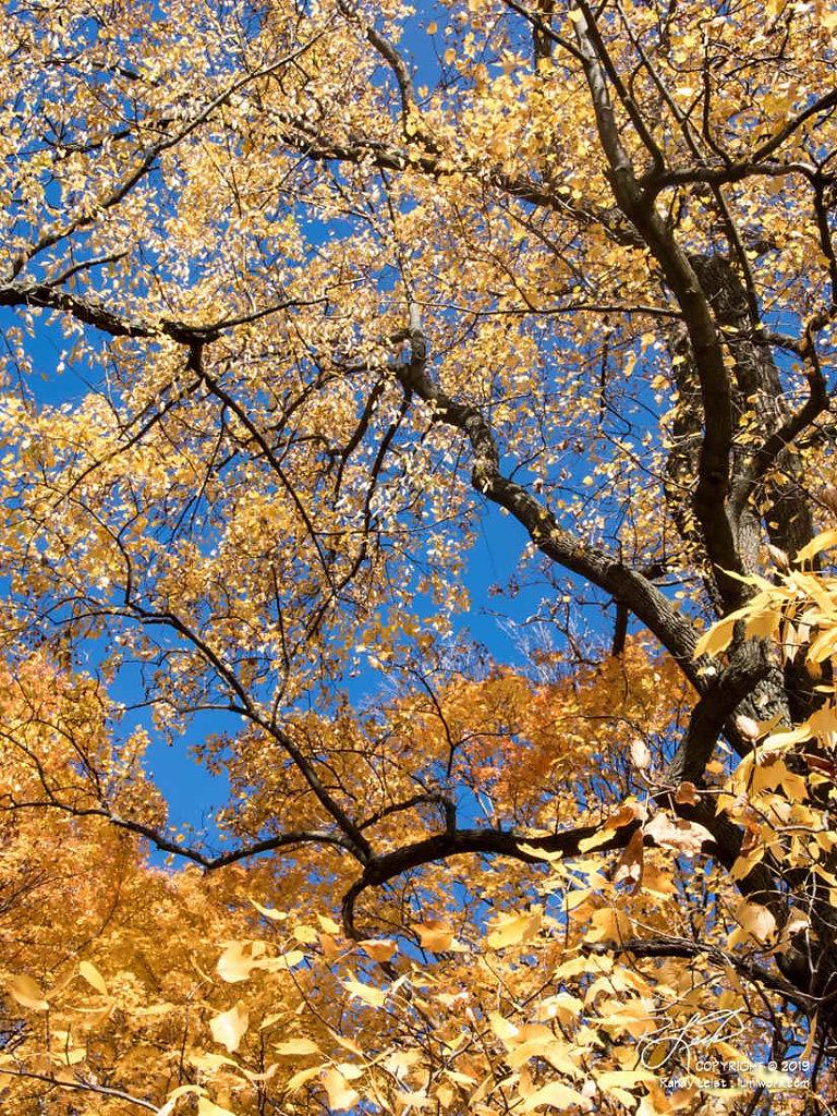 Technicolor Tree